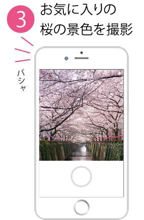 桜の景色を撮影